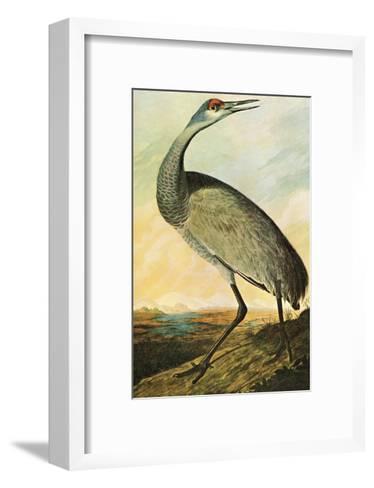 Sandhill Crane-John James Audubon-Framed Art Print