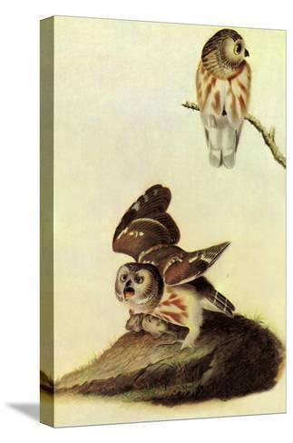 Saw Whet Owl-John James Audubon-Stretched Canvas Print