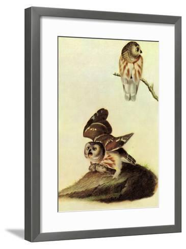 Saw Whet Owl-John James Audubon-Framed Art Print