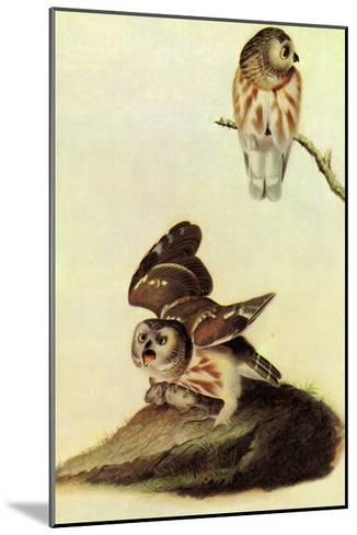 Saw Whet Owl-John James Audubon-Mounted Art Print