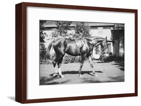General Pershing's Horse Quidron--Framed Art Print