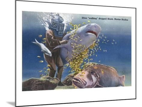 Marineland, Florida - Diver Moving Drugged Shark at Marine Studios-Lantern Press-Mounted Art Print