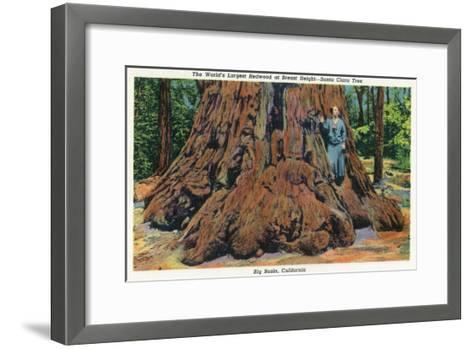 Big Basin, California - Woman Stands by Santa Clara Tree-Lantern Press-Framed Art Print