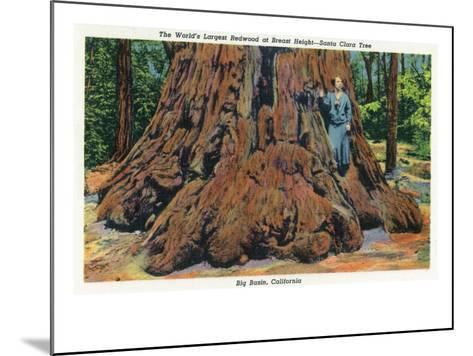Big Basin, California - Woman Stands by Santa Clara Tree-Lantern Press-Mounted Art Print