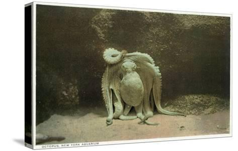 New York City, New York - Octopus at the Aquarium-Lantern Press-Stretched Canvas Print