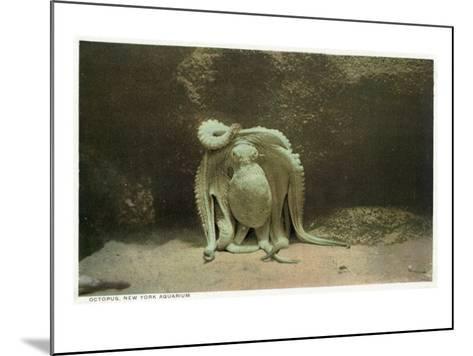 New York City, New York - Octopus at the Aquarium-Lantern Press-Mounted Art Print