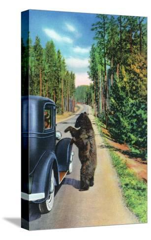 Yellowstone Nat'l Park, Wyoming - Bear Begging by a Car-Lantern Press-Stretched Canvas Print