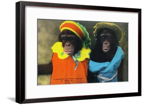 St. Louis, Missouri - Forest Park Zoo Chimpanzees in Costume-Lantern Press-Framed Art Print