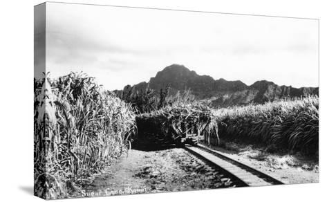 Hawaii - Sugar Cane Field on Kauai Island-Lantern Press-Stretched Canvas Print