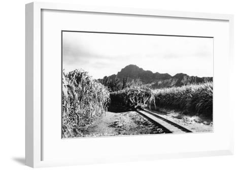 Hawaii - Sugar Cane Field on Kauai Island-Lantern Press-Framed Art Print