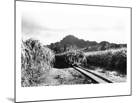 Hawaii - Sugar Cane Field on Kauai Island-Lantern Press-Mounted Art Print