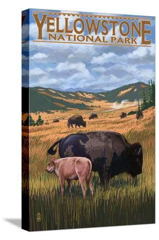 Bison and Calf Grazing - Yellowstone National Park-Lantern Press-Stretched Canvas Print