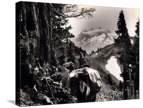 Hoh-Solduc Trail, Olympic Peninsula, Undated-Asahel Curtis-Stretched Canvas Print