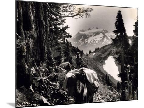 Hoh-Solduc Trail, Olympic Peninsula, Undated-Asahel Curtis-Mounted Giclee Print