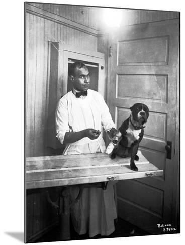 Veterinary Care of Dog, 1921-Marvin Boland-Mounted Giclee Print