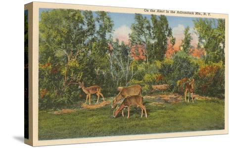 Deer, Adirondack Mountains, New York--Stretched Canvas Print