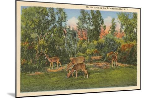 Deer, Adirondack Mountains, New York--Mounted Art Print