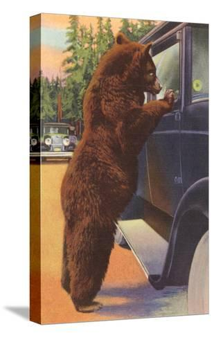 Bear at Car Window--Stretched Canvas Print