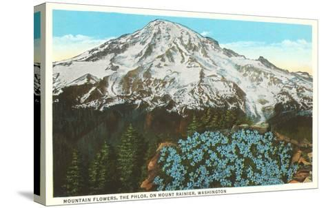 Phlox on Mt. Rainier, Washington--Stretched Canvas Print