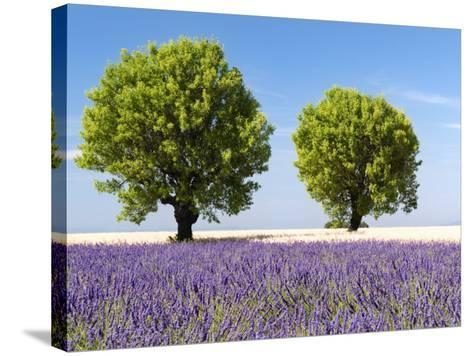 Two Trees in a Lavender Field, Provence, France-Nadia Isakova-Stretched Canvas Print