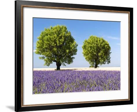 Two Trees in a Lavender Field, Provence, France-Nadia Isakova-Framed Art Print