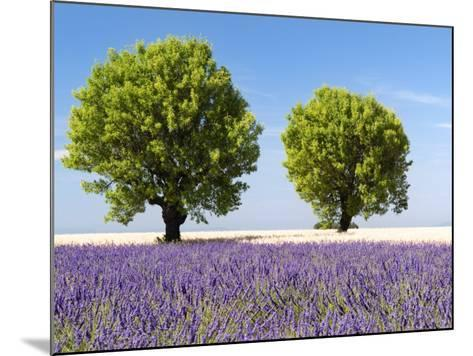 Two Trees in a Lavender Field, Provence, France-Nadia Isakova-Mounted Photographic Print
