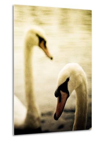 Two Swans Swimming on Lake-Clive Nolan-Metal Print