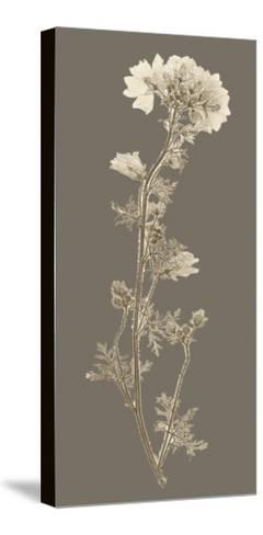 Taupe Nature Study I-Vision Studio-Stretched Canvas Print