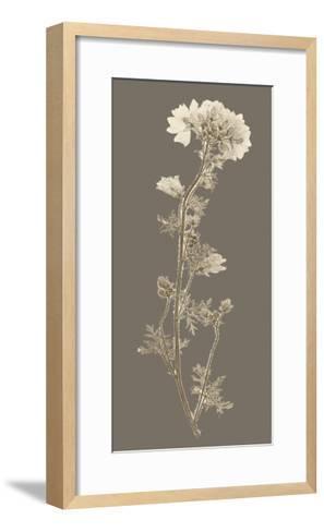 Taupe Nature Study I-Vision Studio-Framed Art Print