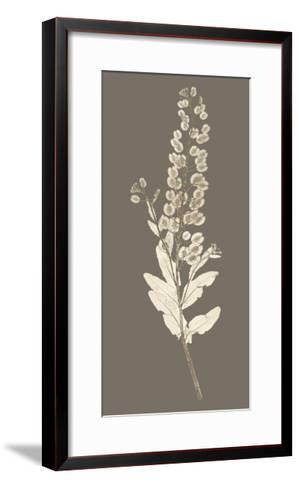 Taupe Nature Study III-Vision Studio-Framed Art Print