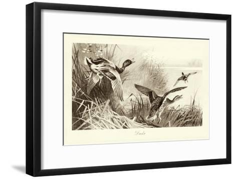 Ducks-A^ Thorburn-Framed Art Print