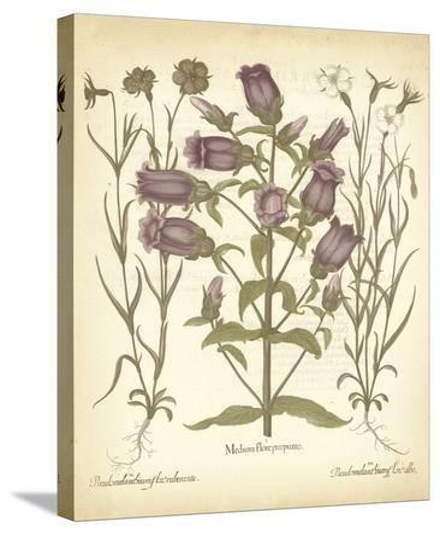 Tinted Besler Botanical II-Besler Basilius-Stretched Canvas Print
