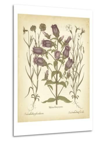 Tinted Besler Botanical II-Besler Basilius-Metal Print