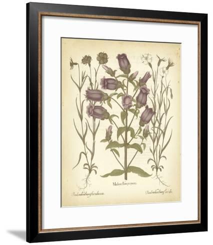 Tinted Besler Botanical II-Besler Basilius-Framed Art Print
