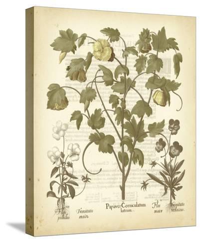 Tinted Besler Botanical IV-Besler Basilius-Stretched Canvas Print