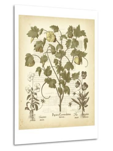 Tinted Besler Botanical IV-Besler Basilius-Metal Print
