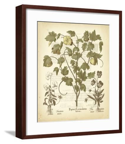 Tinted Besler Botanical IV-Besler Basilius-Framed Art Print