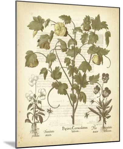 Tinted Besler Botanical IV-Besler Basilius-Mounted Art Print