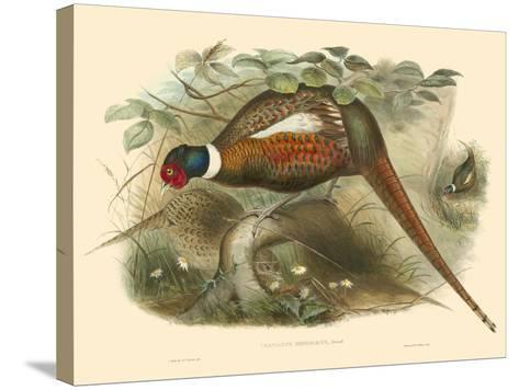 Gould Pheasants II-John Gould-Stretched Canvas Print