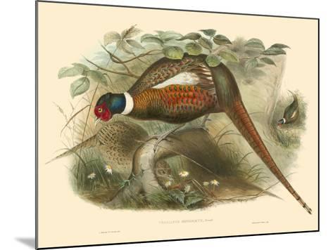 Gould Pheasants II-John Gould-Mounted Art Print