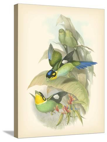 Gould Birds of the Tropics I-John Gould-Stretched Canvas Print
