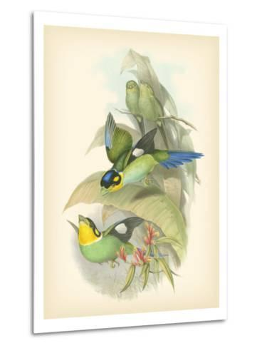 Gould Birds of the Tropics I-John Gould-Metal Print
