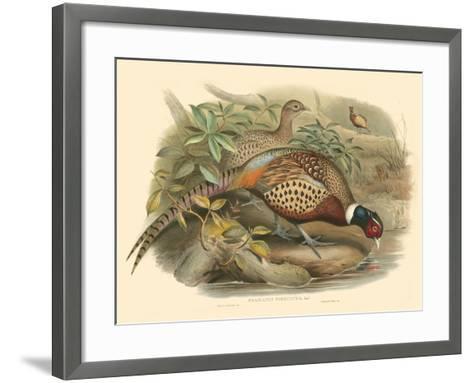 Gould Pheasants I-John Gould-Framed Art Print