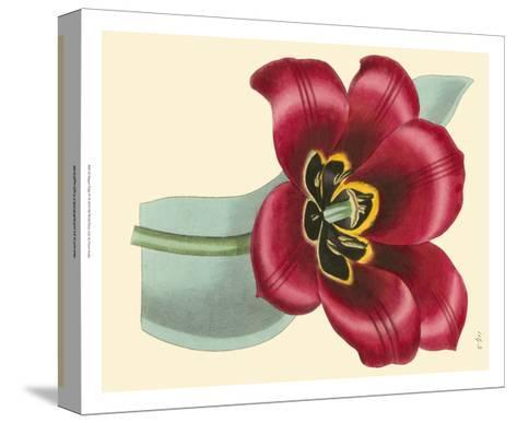 Elegant Tulips IV-Vision Studio-Stretched Canvas Print