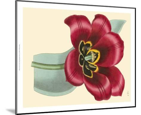 Elegant Tulips IV-Vision Studio-Mounted Art Print