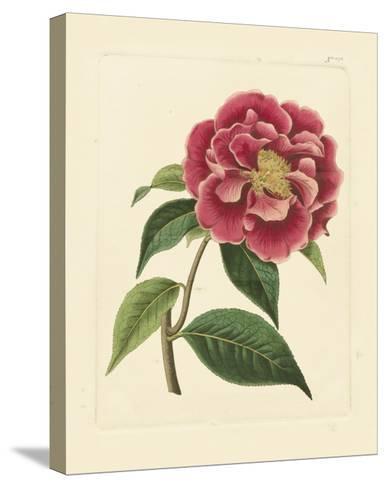 Eva's Garden III--Stretched Canvas Print