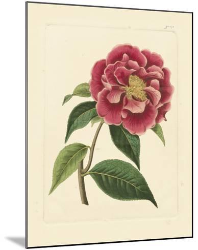 Eva's Garden III--Mounted Art Print
