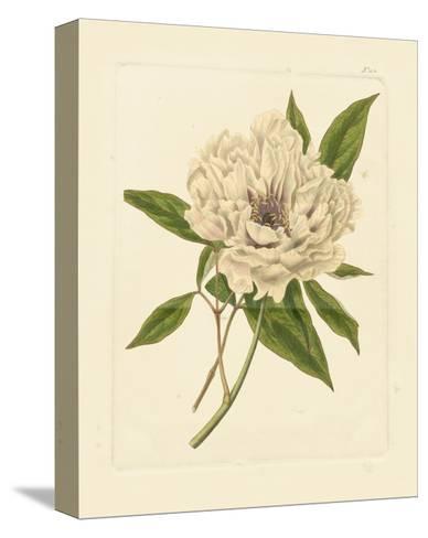 Eva's Garden V--Stretched Canvas Print