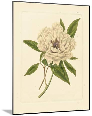 Eva's Garden V--Mounted Art Print