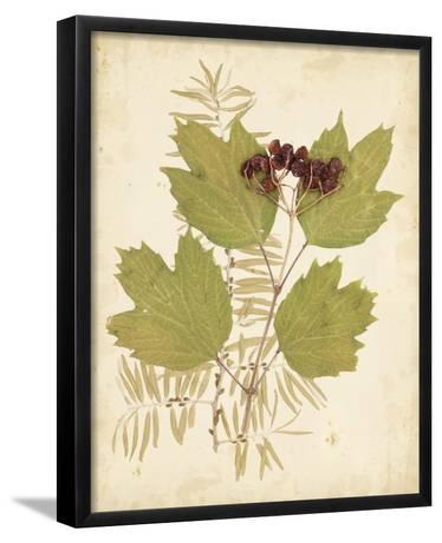 Nature's Collage IV-Vision Studio-Framed Art Print